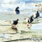 Pigeons on ice by Alan Mattison