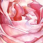 Rose from Balboa Park by Yevgenia Watts