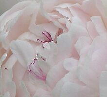Pale Pink Peony by art2plunder