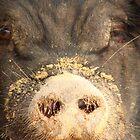 pig by piratesdreaming