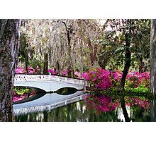 Magnolia Bridge No. 4, Charleston, SC Photographic Print