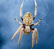 Spider by Dieselsmum