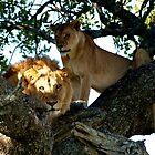 The Life - Serengeti NP - Tanzania by Gorper