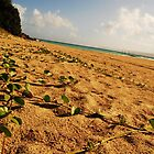 Jungle Vines Lead to North Beach by J. Martinez
