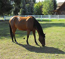 Huntsville Horse ~ Huntsville, Utah by Jan  Tribe