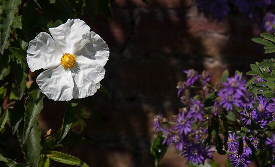 White Flower by dave2k11