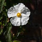 Single White Flower by dave2k11