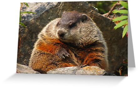 Groundhog Day by Lee-Anne Carver