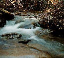 Laurel Creek by Phillip M. Burrow