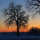 Winter Silhouette by Carol Dawes