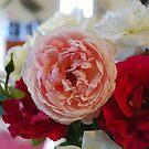 Roses by Julie Sherlock