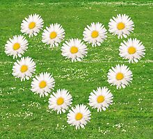 Flower heart from white daisy. by Ligak