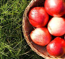 Red apples in grass. by Ligak