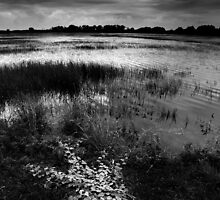 Adelaide River Wet Lands - Northern Territory - Australia by Andrew Brooks