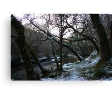 Frosty Forest - Newmarket, Cork, Ireland Canvas Print