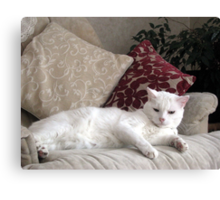 Casper reclining  Canvas Print