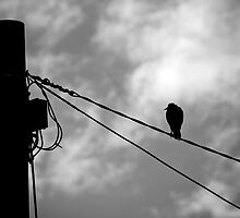 Bird on a wire - Aussie style by beet09