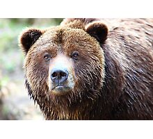 Wild Grizzly Bear Portrait Photographic Print
