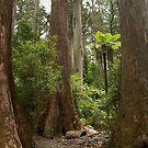 Mountain Ash, Bulga Park, Strzelecki Ranges, Victoria by BronReid