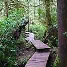 Tofino Path by rferrisx