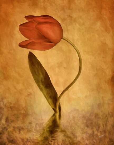 The Tulip * Wall Art by AnaCBStudio
