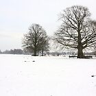 Rhijnauwen, winter 2010 by Majnu