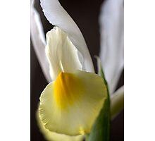 Iris Angel Photographic Print
