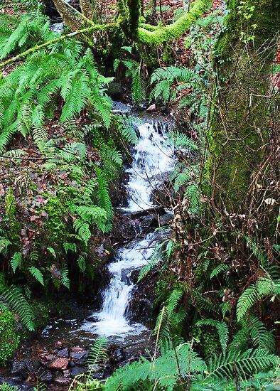 Forest Stream - Glenabo Woods, Cork, Ireland by CFoley