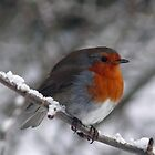 Fat robin in the snow by Pamela Baker