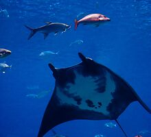 Underwater Flight by Lindsay Martin