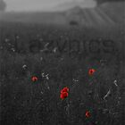 Poppies by netties001