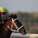 Jockey by Jo McGowan