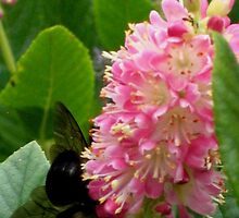 Huge Bee on Pink Bloom by art2plunder
