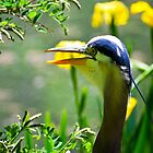 Blue Heron by Jim Terry