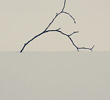 Branch in the snow... by Nuh Sarche