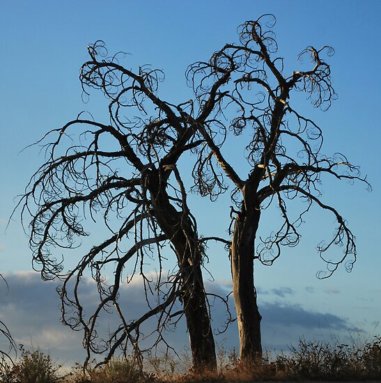 Gnarly Trees by Jim Terry