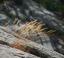 Tuft of grass on the mountainside by Michael Brewer