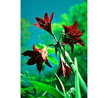 rosey cross Photographic Print