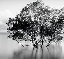The Tree by Kym Howard