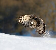 Great Grey Owl In The Snow by quebe150