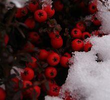 Wild Berries-2 by Abhijeet Basu