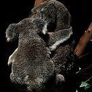 Hugs by Jamie Lee