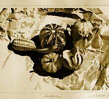 Calabashes by Dietrich Moravec