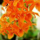 Orange Stardust by TWindDancer