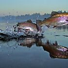 Dance of the Trout by Brian Pelkey