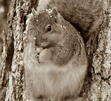 Eating Nuts by WILDBRIMOWILDMAN