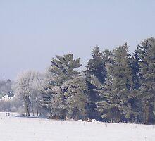 Serene Winter Day in Eastern Iowa by Merja Waters