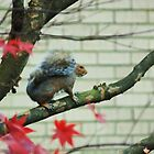 squirrel time by ANNABEL   S. ALENTON