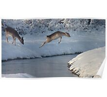 Jumping Fallow deer in the snow 4 Poster