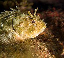 resting rockfish by spyderdesign